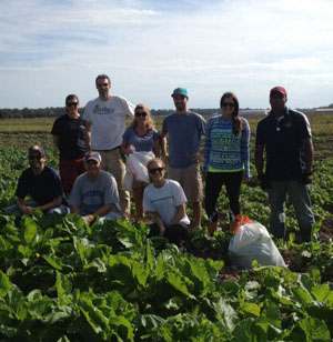 The RiverDogs staff spends the day volunteering with Fields to Families.
